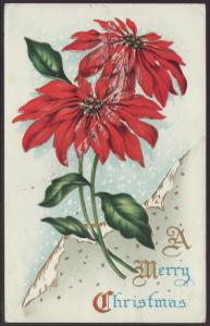 A Merry Christmas,Poinsettia Postcard