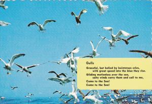 Birds Sea Gulls Poem