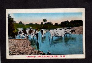 NH Greetings From Leavitts Hill New Hampshire Postcard Vintage Cows Farming