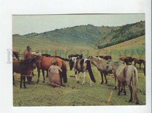 3179373 Mongolia Mare milking Zabhan Aimak photo old postcard