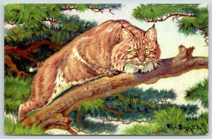 Fred Everett~Bobcat Green-Eyed Wildcat~Tree~National Wildlife Federation~1958