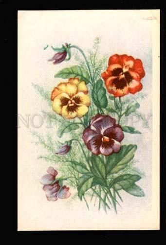051518 PANSY Bouquet Style KLEIN vintage PC