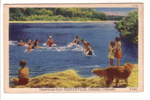 People Splashing in Lake, Dog on Shore, Greetings from Nesterville, Ontario,