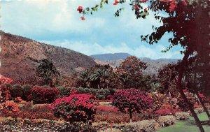 Jamaica, Jamaique Post card Old Vintage Antique Postcard Royal Botanic Garden...