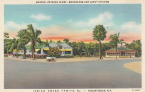 INDIAN ROCKS, Florida, 1930-40s; Indian Rocks Fruits, Inc., Groves-Packing Pl...