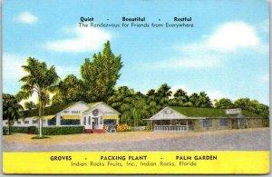 Vintage Florida Roadside Postcard INDIAN ROCKS FRUITS Orange Grove Linen c1940s