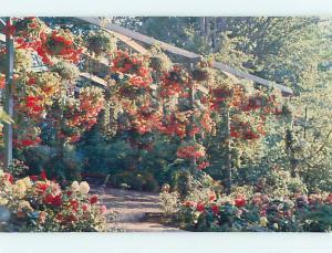 Unused Pre-1980 TOWN VIEW SCENE Victoria British Columbia BC p8291