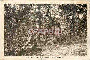 Old Postcard LACANAU (Gironde) The lodgepole pine
