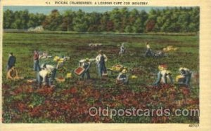 Picking Cranberries Farming, Farm, Farmer  Unused