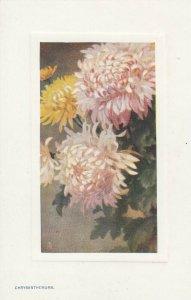 Chrysanthemum Flowers , 1900-10s ; TUCK 9704