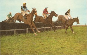 Horses and drivers. Point ot point racing Vintage Salmon postcard