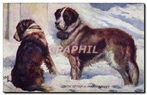 Postcard Old Dog Dogs St Bernard