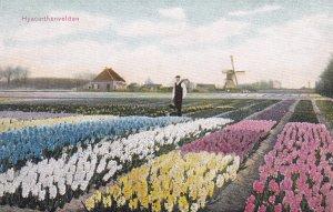 NETHERLANDS, 1900-1910s; Hyacinthenvelden
