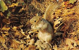 Squirrel Squirrel / Chipmunks / Woodchucks Stamp on back