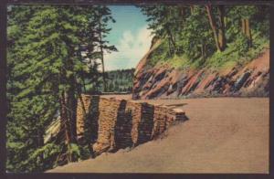 Curve on Skyline Drive,Great Smoky Mountains Postcard