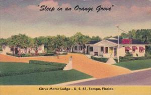 Florida Tampa Citrus Motor Lodge 1951