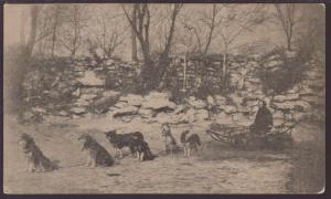 Dog Sled Postcard
