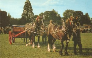 Ornate heavy horses. In the show Ring Nice vintage J. Salmon PC