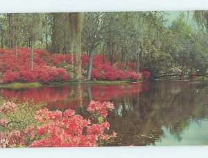 Pre-1980 MIDDLETON GARDENS SCENE Charlotte North Carolina NC AD3382-12