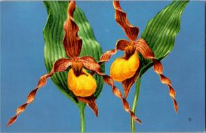 Yellow Lady's Slipper National Wildlife Fed Wildflowers Vintage Postcard Q19