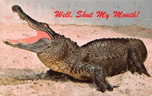 Alligator Post Card Southern Hospitality Florida, USA Unused