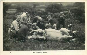 British social history horse her ratting bones photo postcard