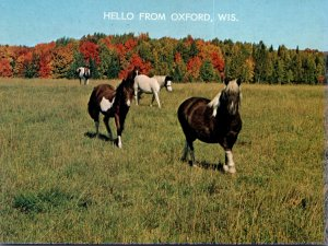 Wisconsin Greetings From Oxford With Horses In Pasture