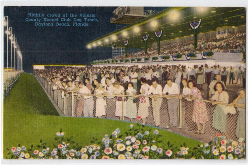 Daytona Dog Track >> Kennel Club Dog Track Daytona Beach Fl Hippostcard