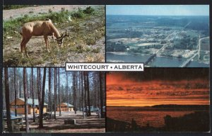 Alberta MultiView of WHITECOURT Where even the Rivers Meet - Chrome 1950s-1970s