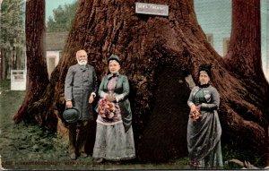 California Santa Cruz Big Grove Park General Fremont 1909