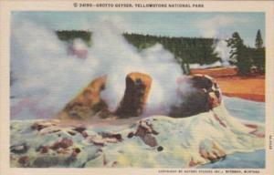 Grotto Geyser Curteich Yellowstone National Park