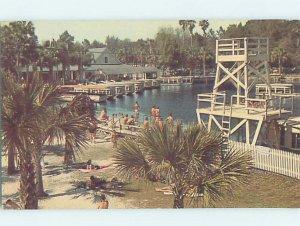 Pre-1980 SILVER SPRINGS SCENE Ocala Florida FL AF9873