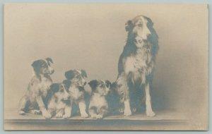 English Shepherds (Sheep Herding Dogs) Momma & 4 Growing Puppies~RPPC c1906