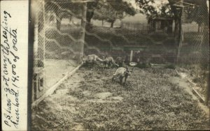 Grafton OH Cancel 1909 - Caged Foxes Real Photo Postcard