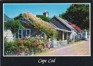 Typical Rose Covered Cottage On Cape Cod Massachusetts
