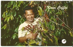 Vintage Postcard, Coffee Berries, Kona Hawaii, Hawaiian Kona Coast Curteich