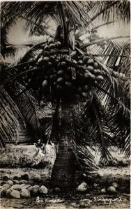 CPA AK SINGAPORE REAL PHOTO The Cocoa (a1481)