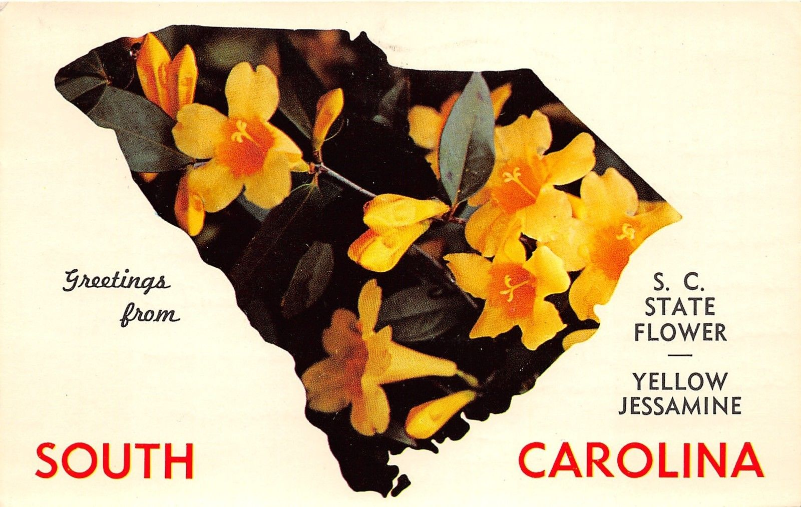 South Carolinayellow Jessamine State Flower In Shape Of State1963