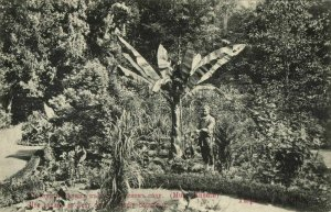 georgia russia, TBILISI TIFLIS, Banana Blossom Botanical Garden (1910s) Postcard