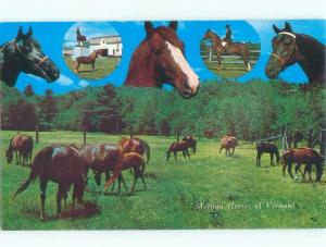 Unused Pre-1980 VERMONT MORGAN HORSES Published In Manchester Vermont VT E6958