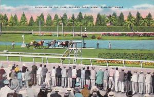 Horse Racing Running On The Turf Hialeah Park Miami Florida
