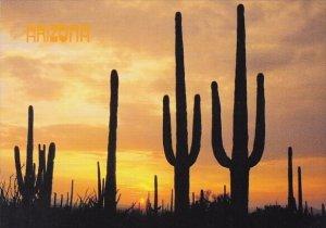 Arizona Tempe Saguaro Cacti Silhouetted By An Arizona Sunset