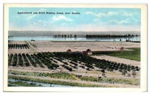 Early 1900s Agricultural and Fruit Raising Scene near Seattle, WA Postcard