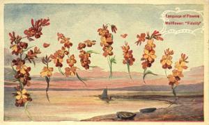 Language of Flowers - Wallflower - Fidelity - WB