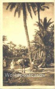 Un Chemin dans la Palmeraie Alger Algeria, Africa, Unused