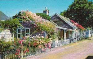 Massachusetts Cape Cod Rose Covered Cottages On Nantucket Island