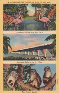 Florida Interesting Views In Florida Keys Curteich