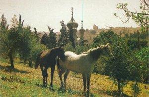Postcard Israel Jerusalem Russian  Church Magdalene horses