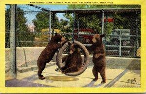 Michigan Traverse City Clinch Park Zoo Frolicking Bear Cubs 1949
