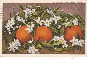 Florida Oranges and Blossoms 1924 Curteich